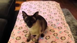 Cat sings Aha - Take on me