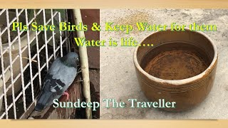 Keep Water Bowl for Birds I Request from Sundeep The Traveller
