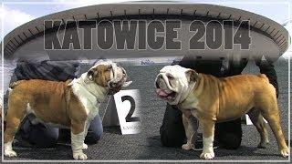 CACIB Dog Show/Wystawa Psów KATOWICE 2014  Bulldog  JAGBULL