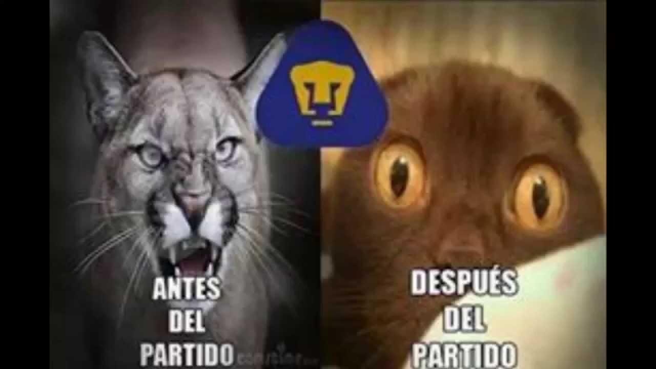 Memes Por La Derrota De Pumas Vs Amrica 0 1 J 7 2202