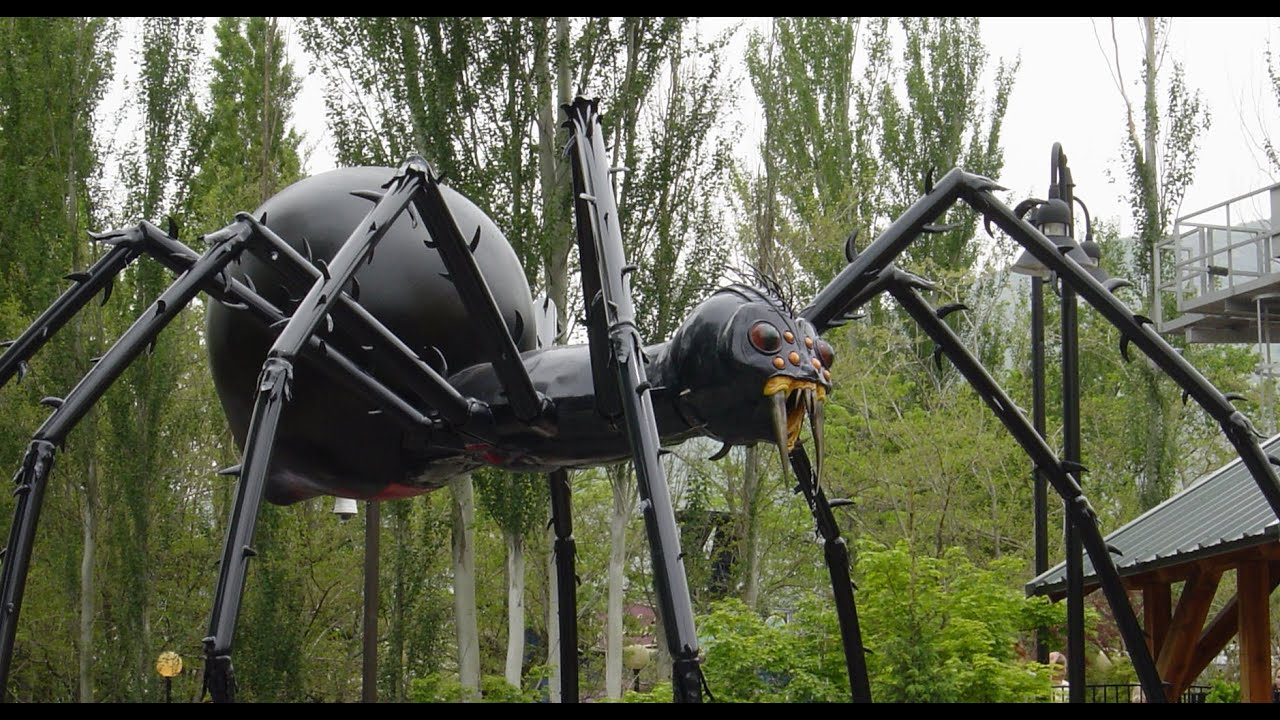 Worlds Largest Spider Ever Found