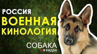 Военная кинология. Россия.