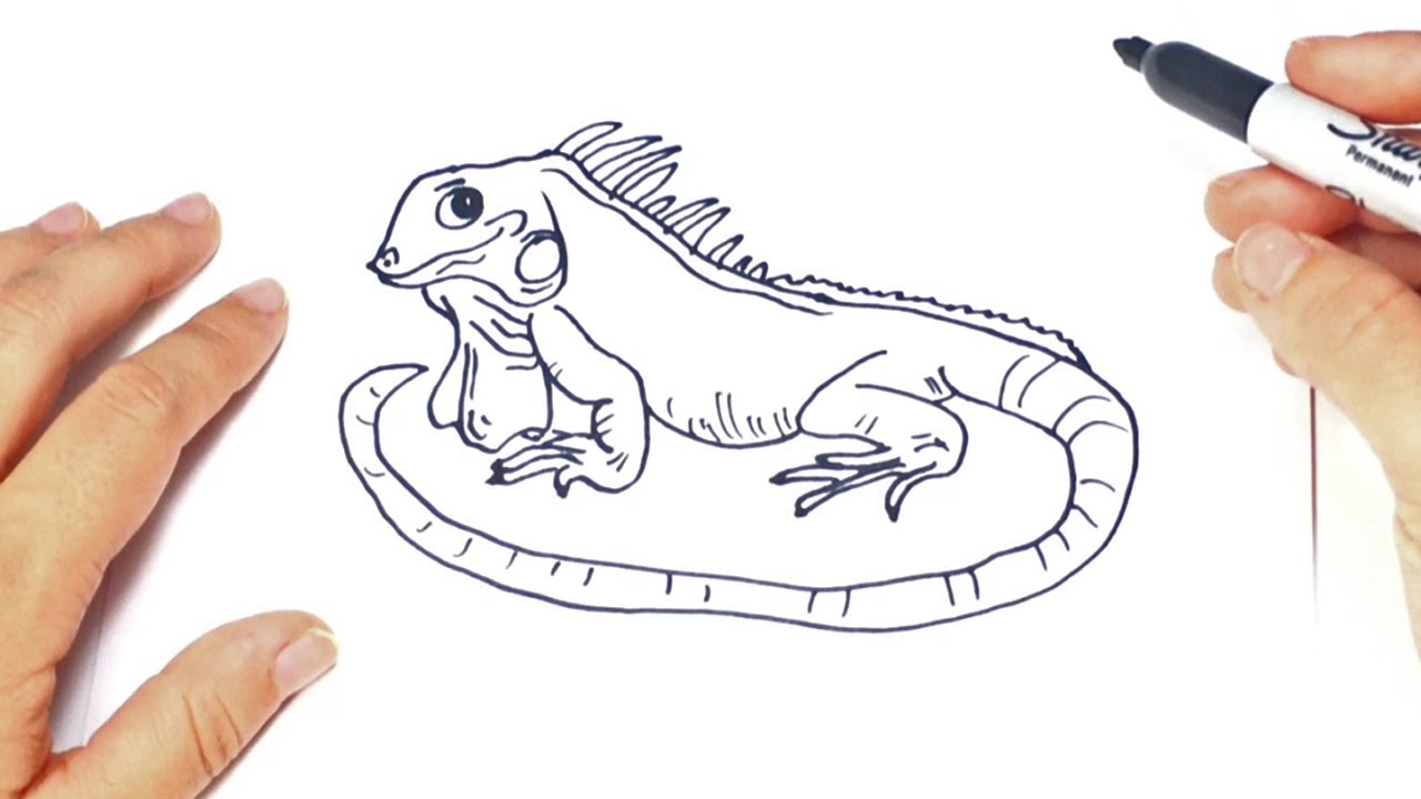 Como Dibujar Un Iguana Paso A Paso Dibujo Facil De Iguana Youtube