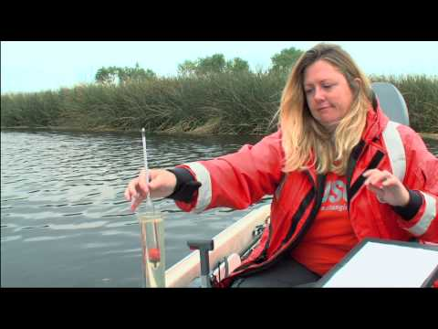 Wetland Revival 2014