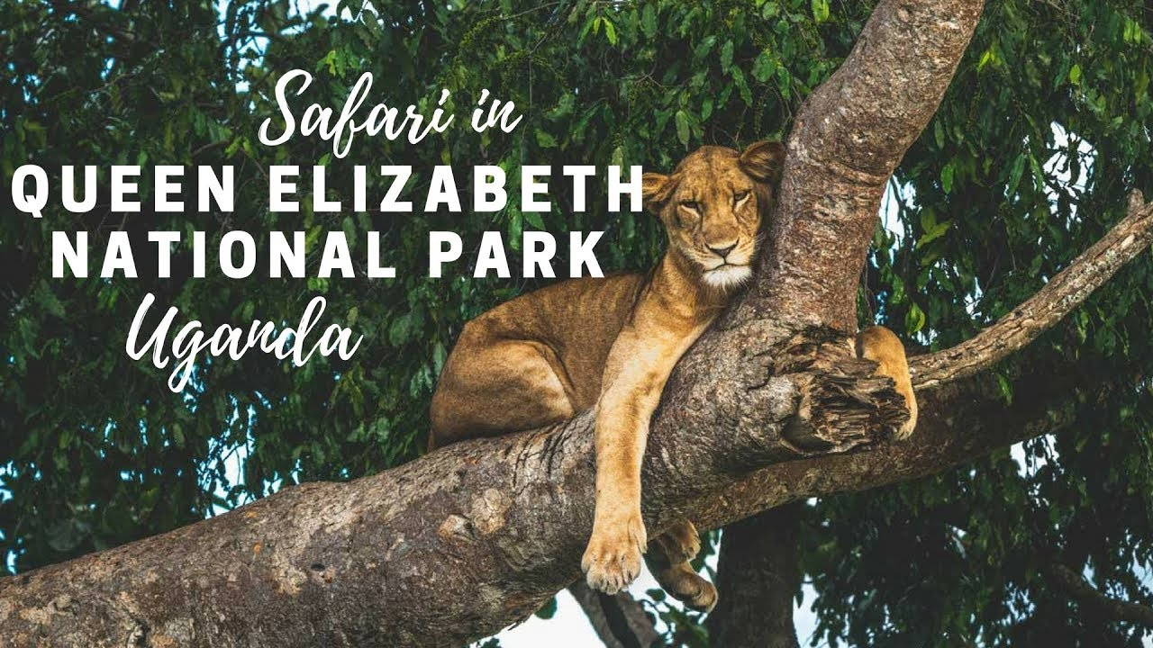 Image result for queen elizabeth national park