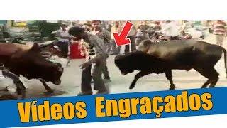 Vídeos Engraçados - Olha o touro