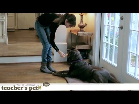 How to Stop Your Dog From Begging | Teacher's Pet With Victoria Stilwell