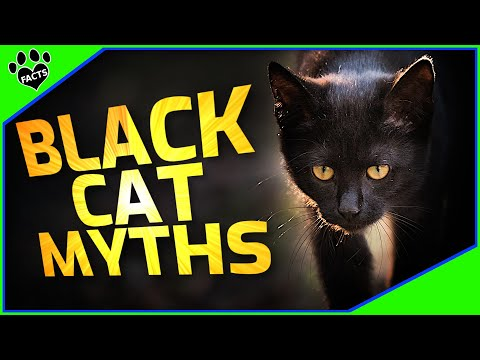 Cats 101: Top 10 Black Cat Facts and Myths  - Animal Facts