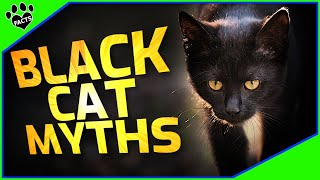 Black Cats Facts and Myths  Cats 101