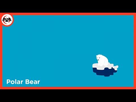 Puscifer polar bear live webcam