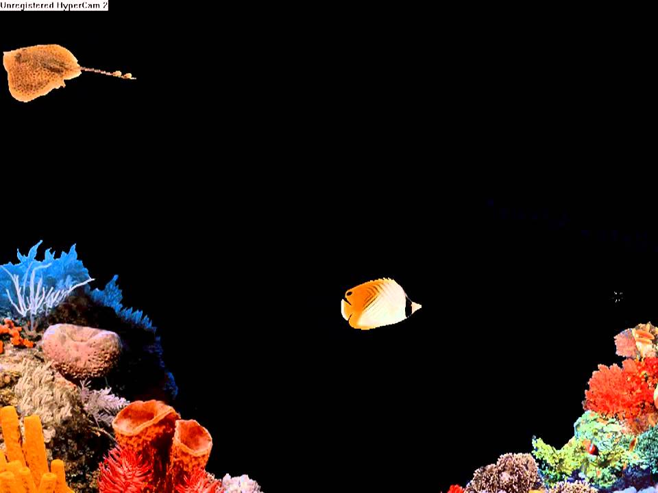 protector de pantalla de windows 98 peces youtube