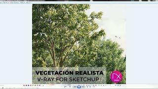 Material De Vegetación Realista / V-Ray For Sketchup / DK Studio