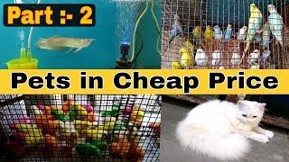 Pets Market | Kalyan Pet Market | pets in cheap price | mumbai