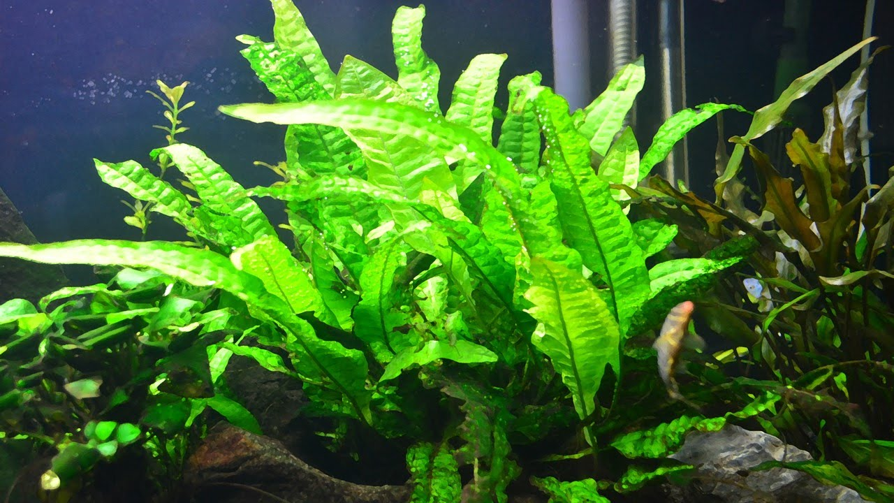 How to Plant an Aquarium: 8 Steps (with Pictures) - wikiHow