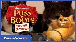 The Two Talking Cats | PUSS IN BOOTS FAVORITE CAT VIDEOS