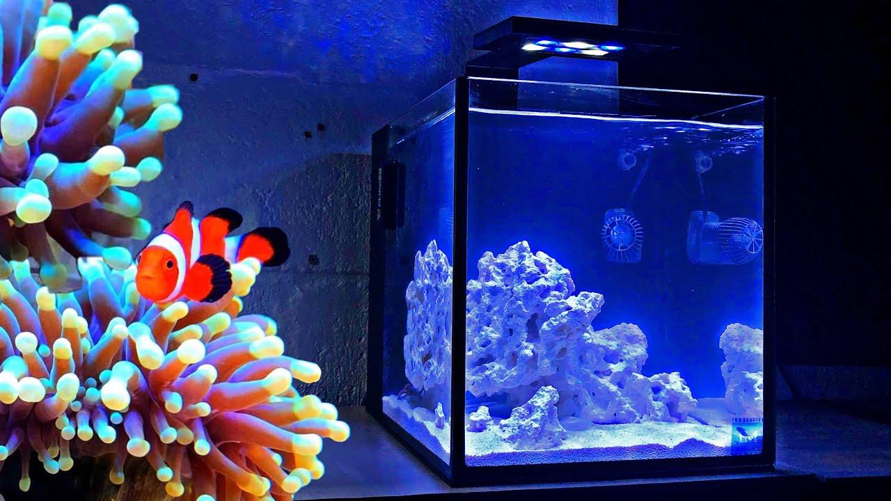 How To Set Up Nano Reef Tank Reef Tank Aquascaping Youtube