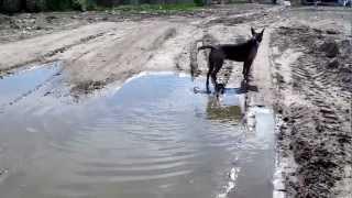 Собака в грязи.