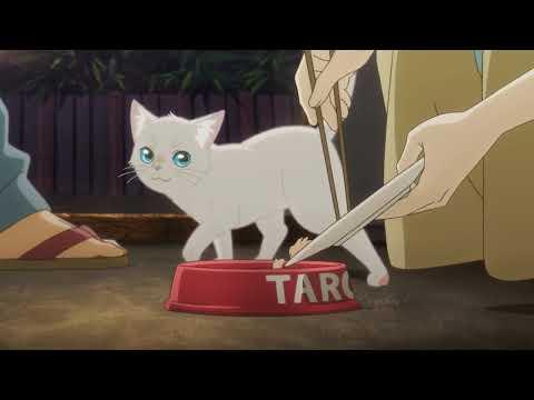 猫世界へようこそ!編PV『泣きたい私は猫をかぶる』(6月18日Netflixにて配信スタート!)