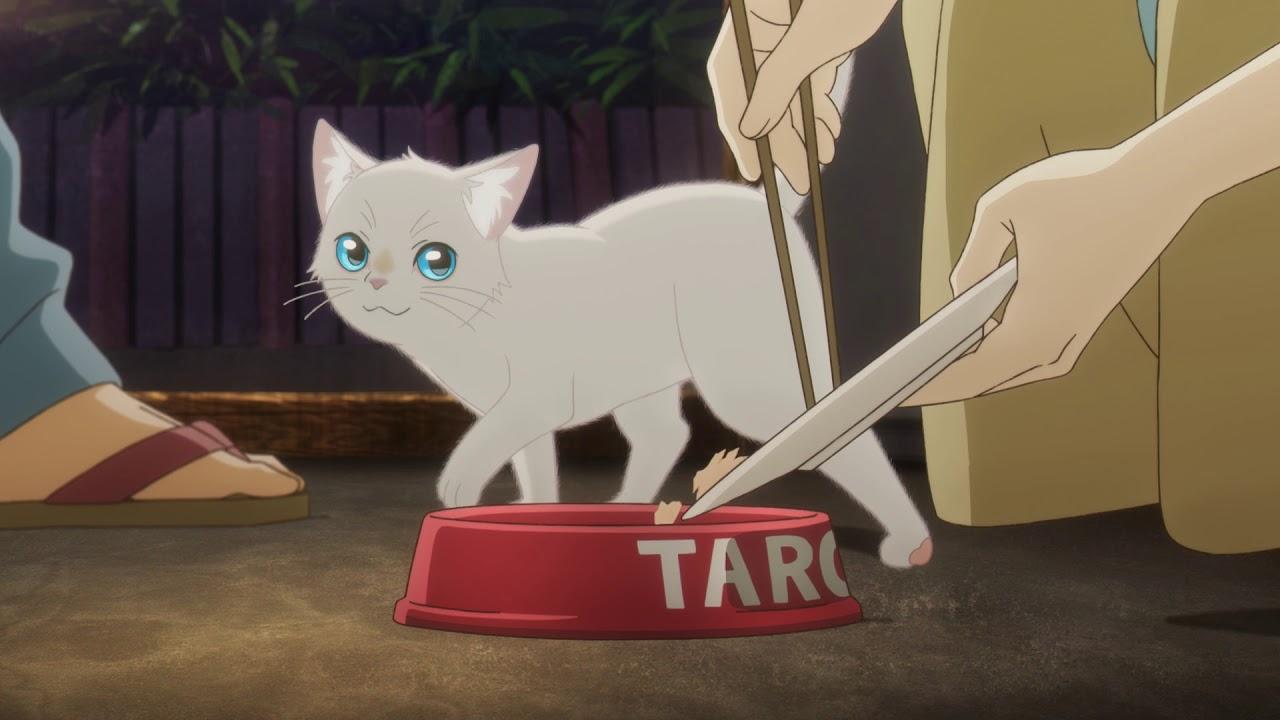 泣き たい 私 は 猫 を かぶる netflix