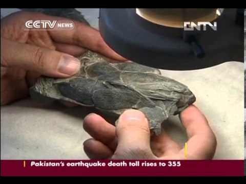 419 mln year old fish fossil found with human like jaw
