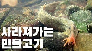 사라져가는 민물고기 / 새코미꾸라지