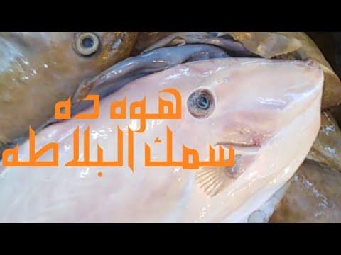 سمك خنزيره بلاطه بدون شوك للأطفال هوه ده وكمان يبني عظام الأطفال Youtube