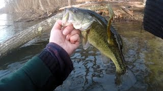 Late Winter Largemouth Bass Worm Fishing with Weightless MOTOR OIL Worms
