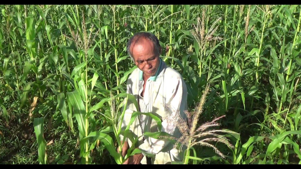 Philippines: Farmers i...