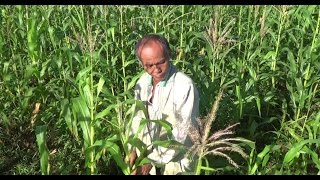 Philippines: Farmers in Negros enjoy benefits of new corn mill