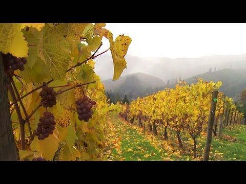 Grant's Getaways: Trappist Abbey in Oregon Wine Country