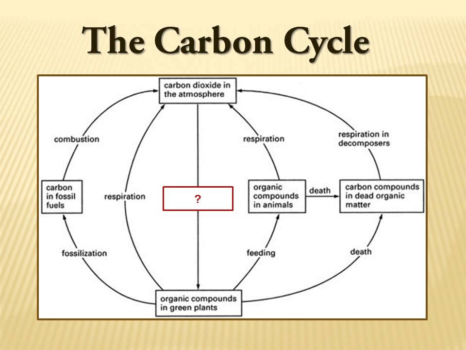 Exam prep carbon cycle example youtube exam prep carbon cycle example ccuart Image collections