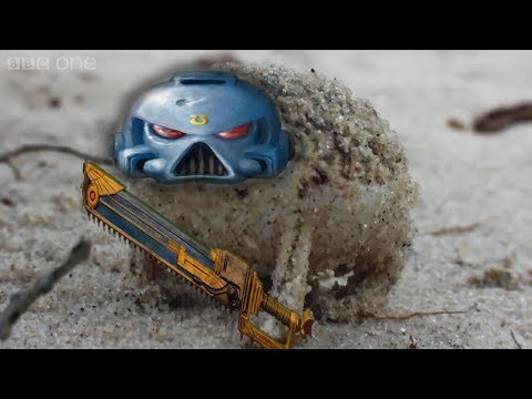 Angry Space Marine Frog