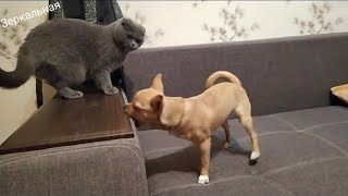 ВЛОГ#в мире животных   бои без правил🐈🐕