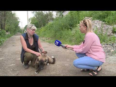 Городской приют с собственной ветеринарией для бездомных животных откроют в Череповце