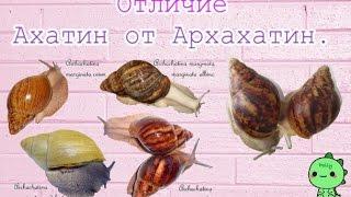 Отличие Ахатин от Архахатин.