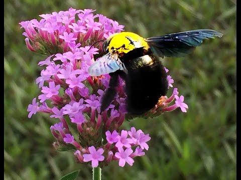 รวมคลิป สุขยิ้มผ่อนคลาย 8 นาทีกับธรรมชาติดอกไม้สีม่วงสวยงาม ผึ้ง แมลงปอ แมลงภู่ผึ้ง ดนตรีไพเราะบำบัด