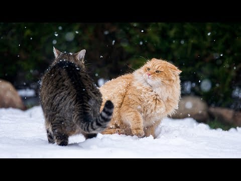 Funny Cats Fight Between Glass Compilation (2018)