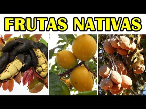 Espécies de Frutíferas nativas do Brasil que poucos conhecem (( Jatobá , Baru e Abiu ))
