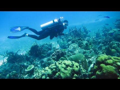 Lionfish Hunting And Night Diving In Belize
