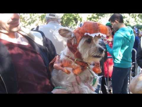 Halloween dog parade, New York - The Canine Cut by McTraveller