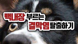 백내장 부르는 고질병, 강아지 결막염 탈출하기  108…