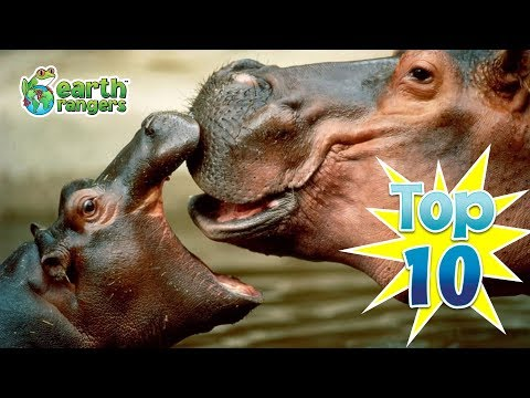 Top 10: Animal Mothers