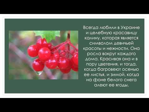 Символы Украины растения и животные