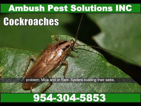 pest-control-coconut-creek-|-pest-control-exterminator-services-in-coconut-creek