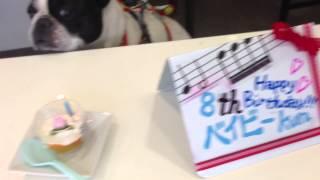 ベイビー君8才のお誕生日おめでとう、また一年健やかに楽しく過ごせます...