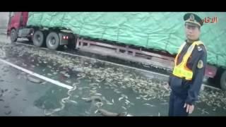 """طن ونصف من الأسماك الحية """"على الطريق السريع"""" فى الصين   صحيفة الاتحاد"""