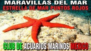 cammx maravillas del mar ep 5 estrella de mar d
