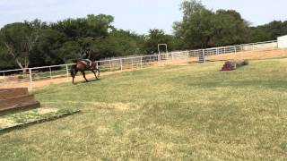 Swass like me Horse August 2015