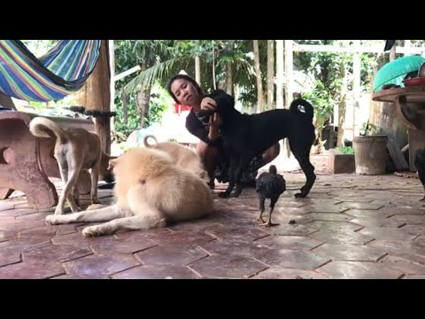 LOVELY SMART GIRL PLAYING BABY CUTE DOGS AT HOME HOW TO PLAY WITH DOG & FEED BABY DOGS #125