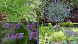 Parterre de plantas vivaces azules, lilas y grises - Decogarden